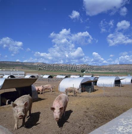 fahrt reisen tiere landwirtschaft ackerbau usa