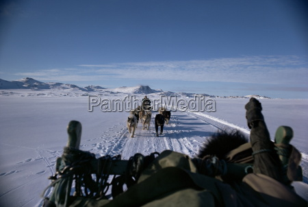 viaggio viaggiare colore animale traffico artico
