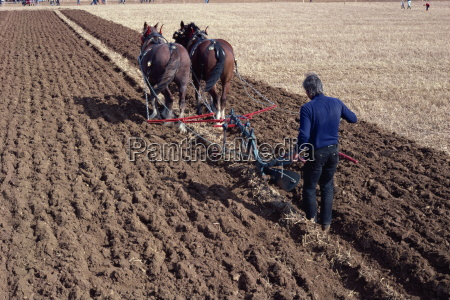 ploughing with horses on a farm