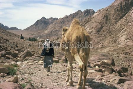 man leading camel near st catherines