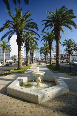 water fountain and palm trees on