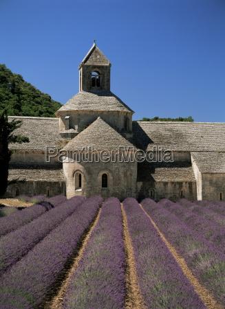abbaye de senanque and lavender near