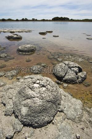 stromatoliten eine der aeltesten lebensformen der