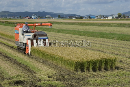 rice harvest with mini combine harvester