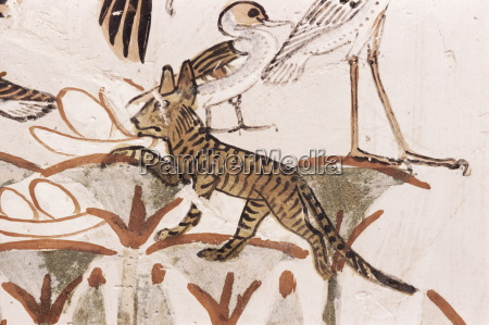 cat climbing papyrus stem in duck