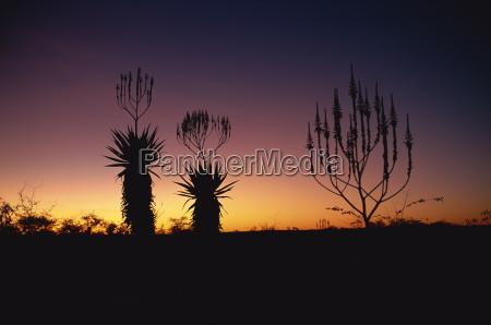 fahrt reisen nacht nachtzeit sonnenuntergang afrika