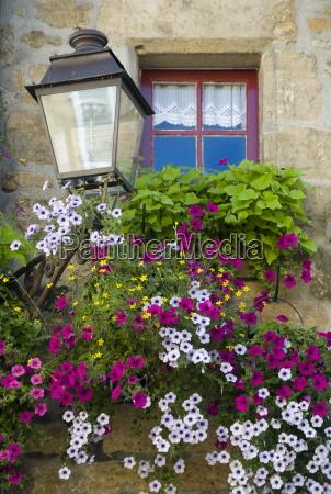 purple petunias cascading from a window