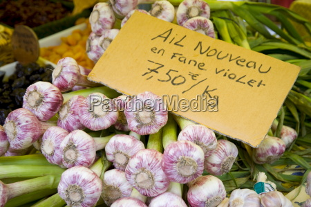 fresh garlic for sale at the