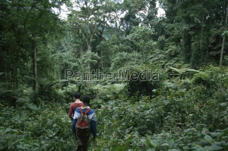 auf der spuren von berggorillas bwindi