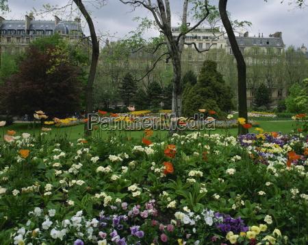 poppies in parc de monceau paris