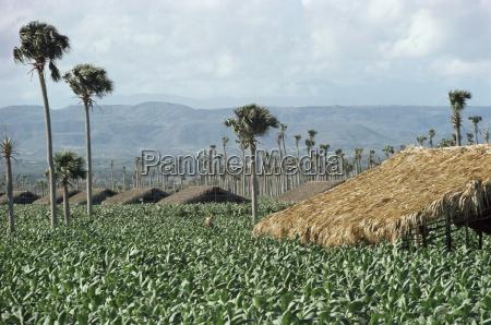 fahrt reisen landwirtschaft ackerbau horizontal mittelamerika