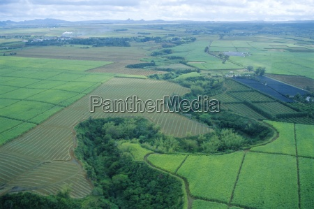 aerial view of sugar cane fields