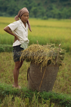 woman in a rice field with