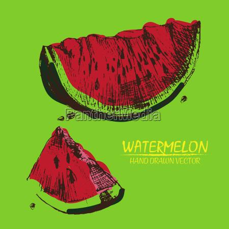 digital vector detailed color watermelon hand