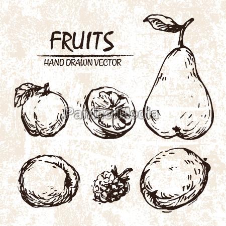 digital vector detailed fruit hand drawn
