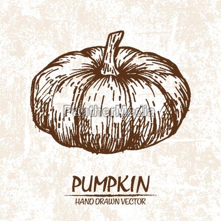 digital vector detailed pumpkin hand drawn