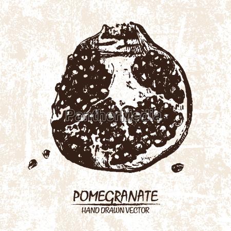 digital vector detailed pomegranate hand drawn