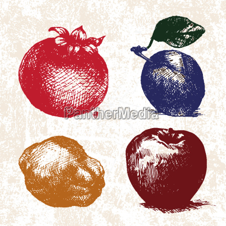 digital vector detailed color fruit hand