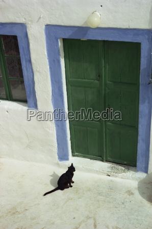 a small black cat waiting at