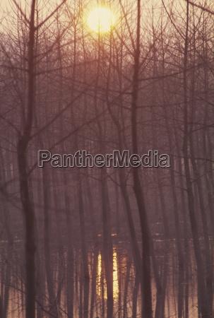 fahrt reisen baum baeume winter sonnenuntergang