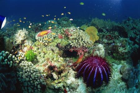 fahrt reisen asien horizontal unterwasser outdoor
