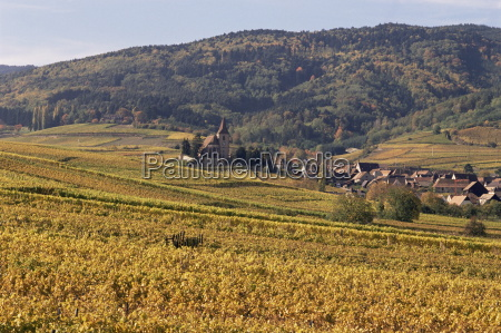 vineyards hunawihr alsace france europe