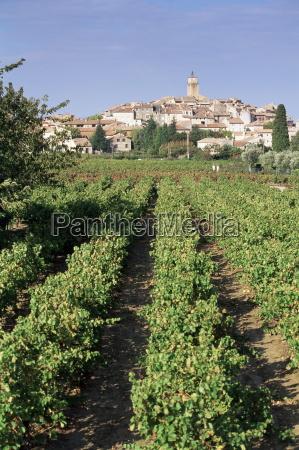 vineyard cote du rhone sablet vaucluse