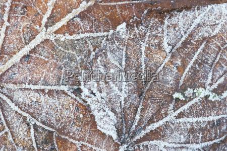 winter blaetter horizontal frost draussen fotografie