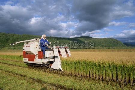 rice harvesting hokkaido japan asia