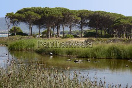 see mit wasserpflanzen und vogel meer