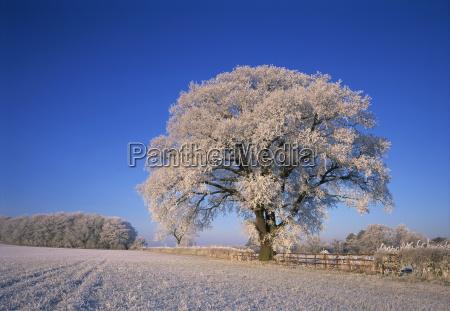 mattiert baum im laendlichen winterszene leicestershire
