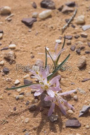 fahrt reisen wueste oednis blume pflanze