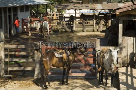 fahrt reisen farbe pferd ross tier