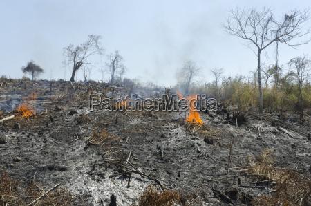 eine verbrannte huegelseite nach der entwaldung