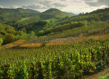 vineyards near cerdon bugey ain rhone
