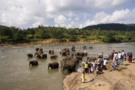 pinnewala elephant orphanage near kegalle hill
