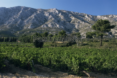 vineyards and montagne ste victoire near