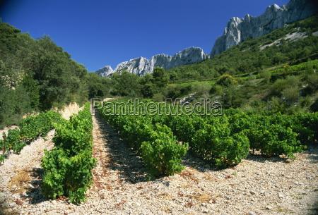 cotes, de, rhone, weinberge, dentelles, de, montmirail, vaucluse, provence, frankreich, europa - 20648165
