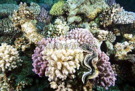 color africa horizontalmente submarino africa del