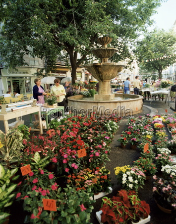 fountain and flower market place aux