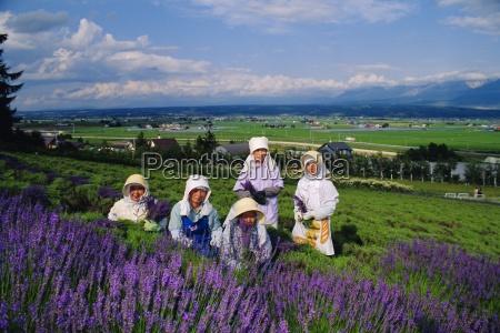 lavender fields furano hokkaido japan