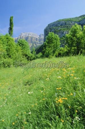 field of spring flowers near torla