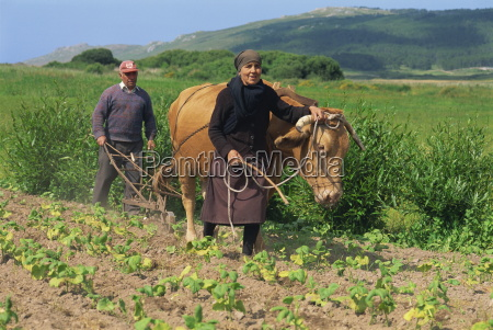 old couple with a bullock subsistence