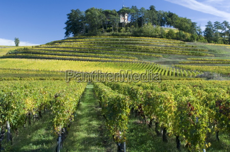 vineyards st emilion gironde france europe