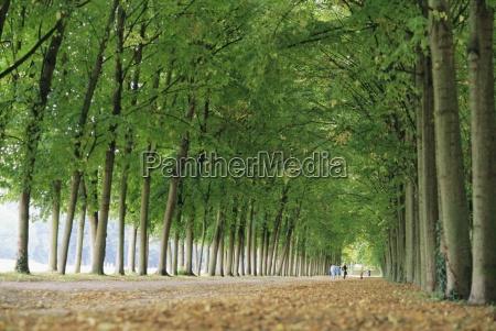 avenue of poplar trees parc de