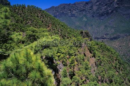 pine trees near el mirador de