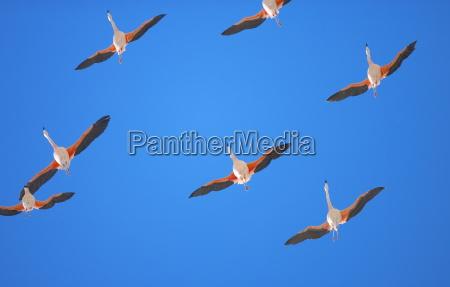 paseo viaje vuelo los animales aves