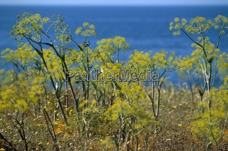 coast island of sardinia italy mediterranean