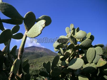 cacti stromboli island eolian islands aeolian