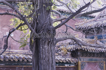 tree and architectural detail forbidden city